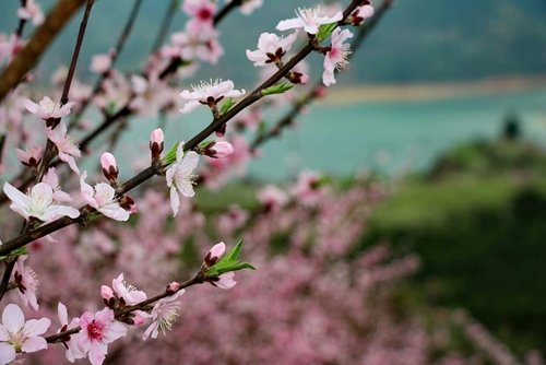 马军  《桃花岛上的春天》